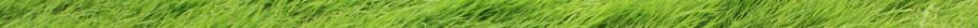 grass horizontal divider 900x26